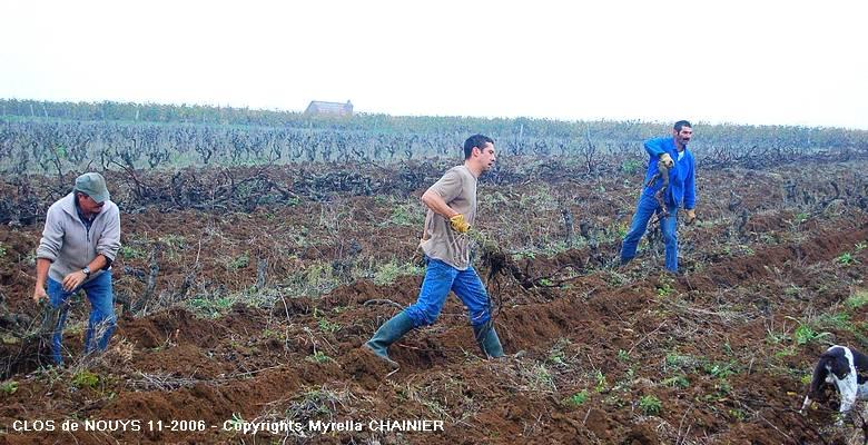Arrachage de la Vigne Clos de Nouys par Myrella CHAINIER 09-11-2006