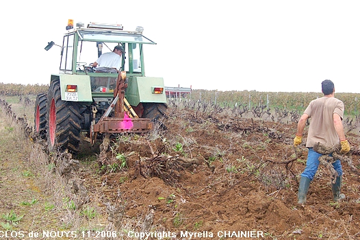 arrachage de la vigne by Myrella CHAINIER 09-11-2006